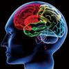 脳神経メカニズムを識別に応用